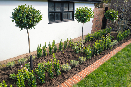 three tall bushes on flower bed